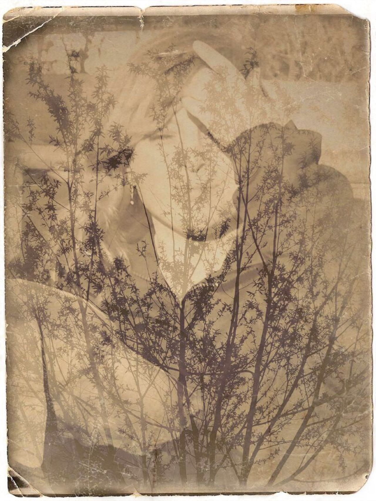 Ancient Paper Old-fashioned Tree Antique Textured  Day No People Outdoors Lilymayparker.blogspot.be Lily May Parker Lily May Collection Beauty In Nature