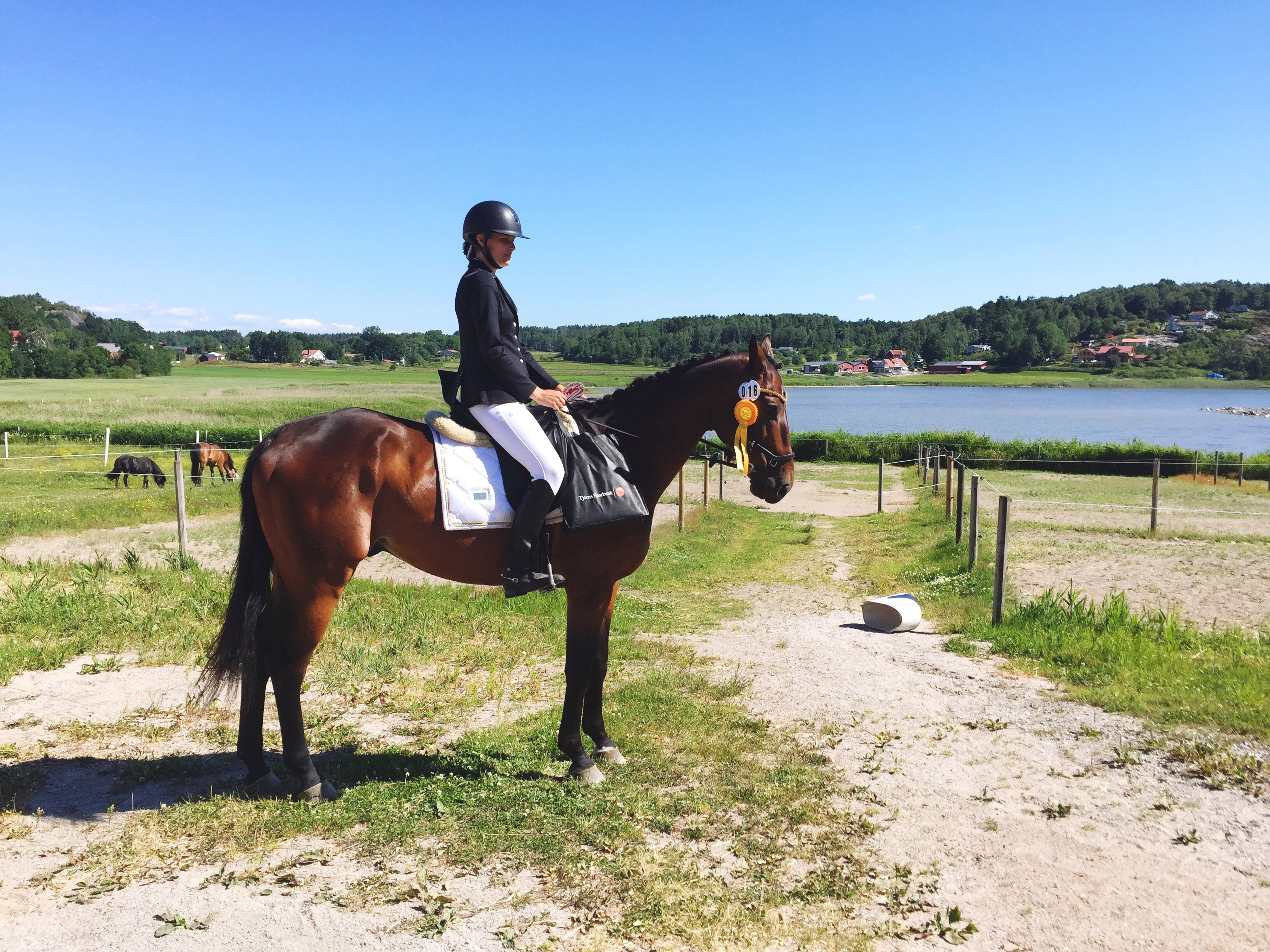 horse, full length, domestic animals, animal themes, mammal, real people, livestock, one person, horseback riding, standing, casual clothing, leisure activity, one animal, field, nature, lifestyles, riding, young adult, outdoors, young women, day, grass, clear sky, sky, people
