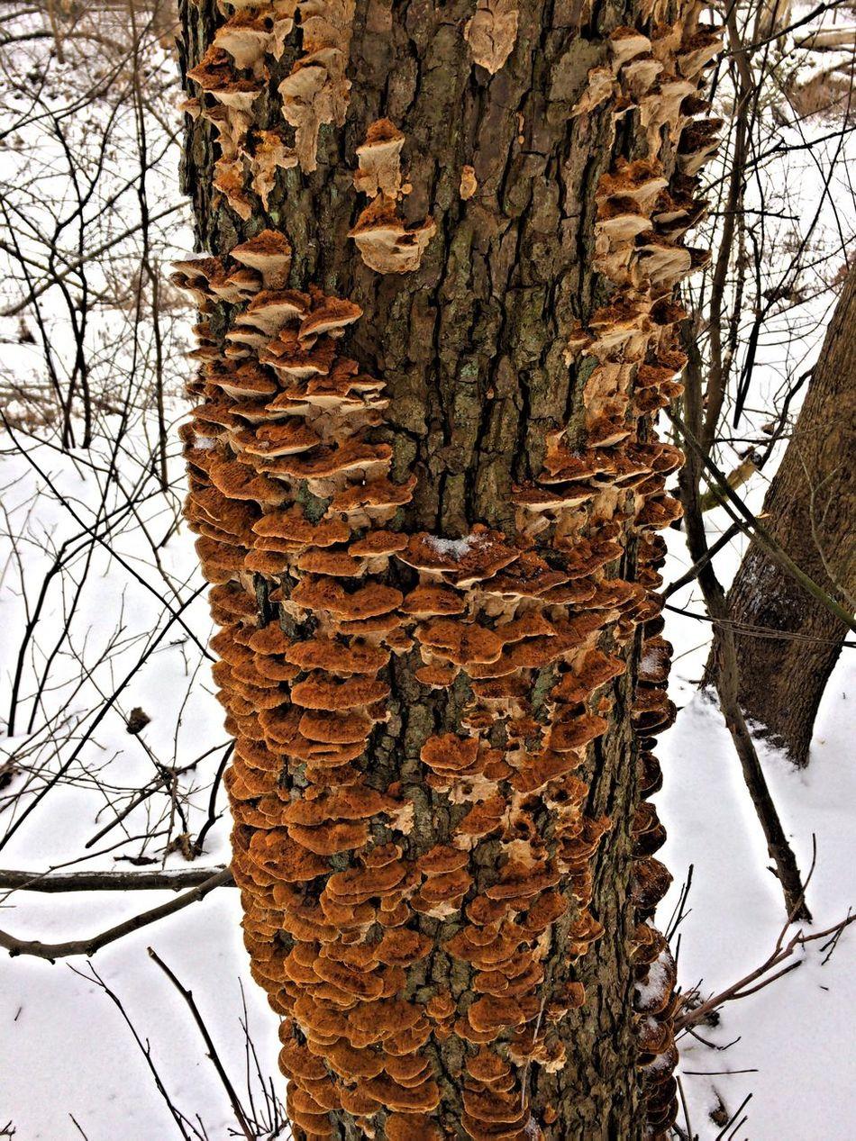 12MP HDR Tree Trunk Mushrooms Snow