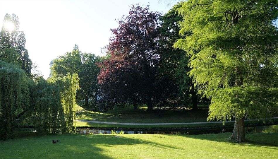 Castle Grounds Day No People Outdoors Park Schlosspark Celle Sunlight Water Reflections