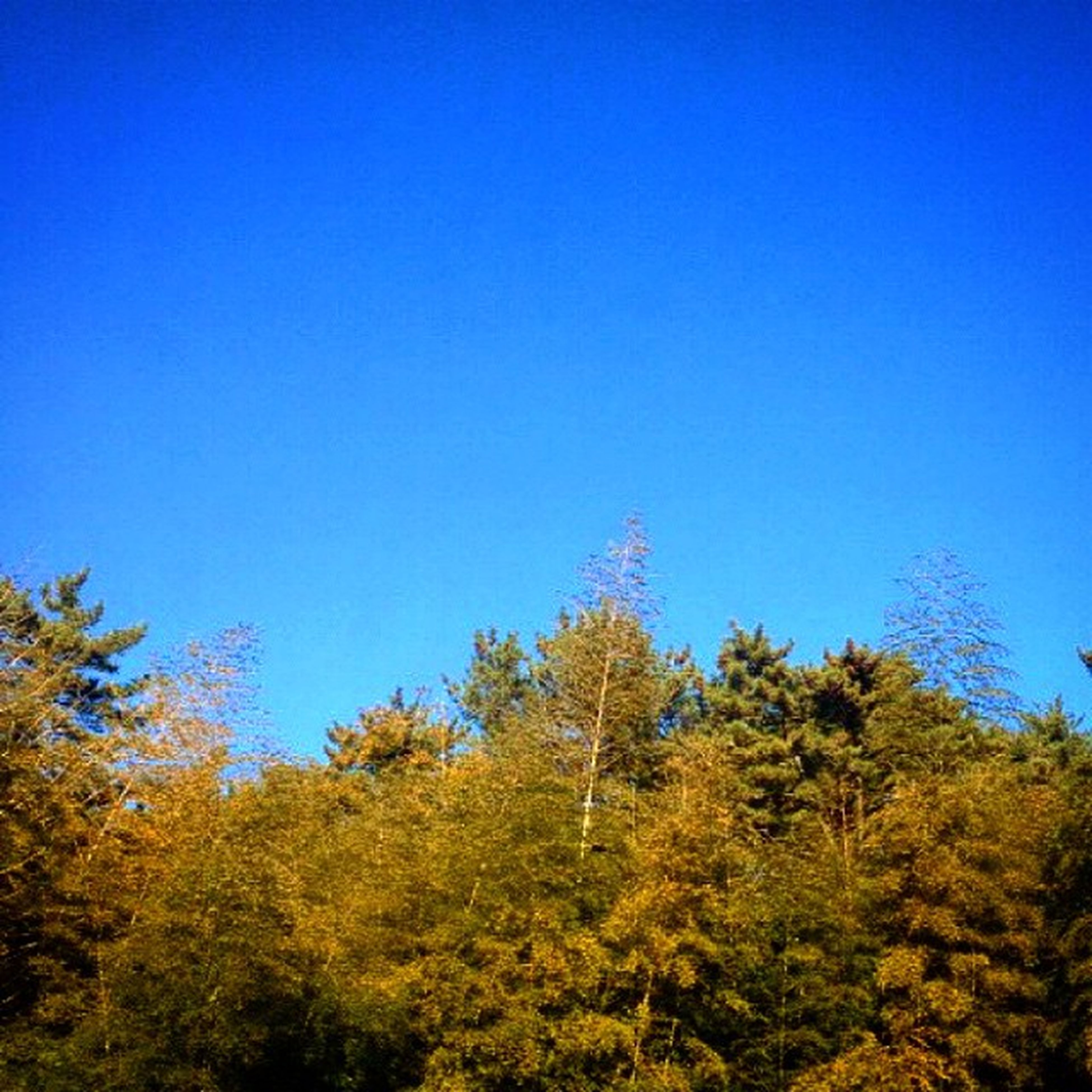 blue, clear sky, copy space, tree, low angle view, tranquility, beauty in nature, growth, nature, tranquil scene, scenics, outdoors, idyllic, no people, day, branch, sunlight, green color, yellow, high section