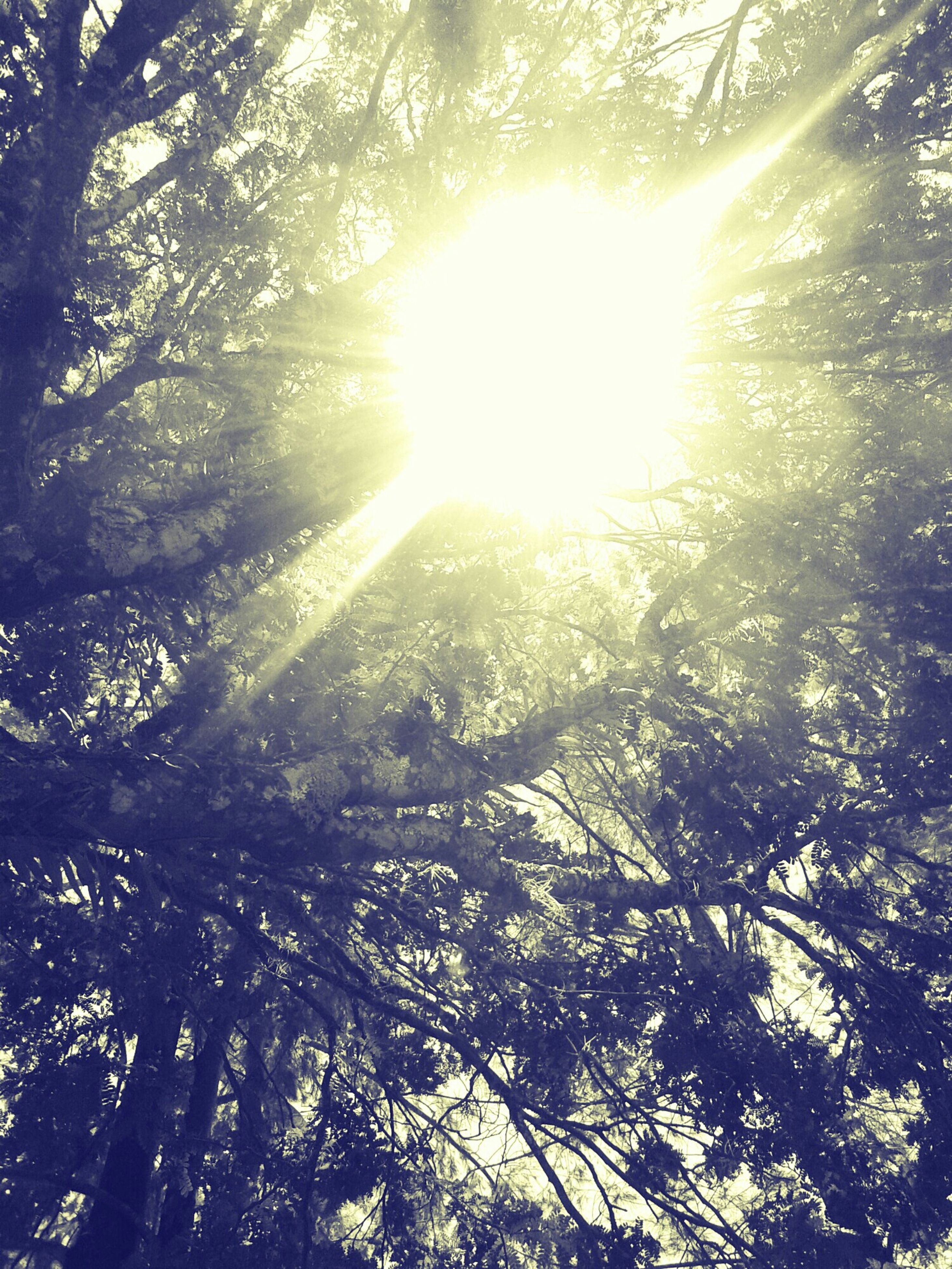 sun, tree, sunbeam, sunlight, lens flare, low angle view, tranquility, beauty in nature, nature, bright, growth, branch, sunny, scenics, tranquil scene, sky, back lit, day, forest, streaming