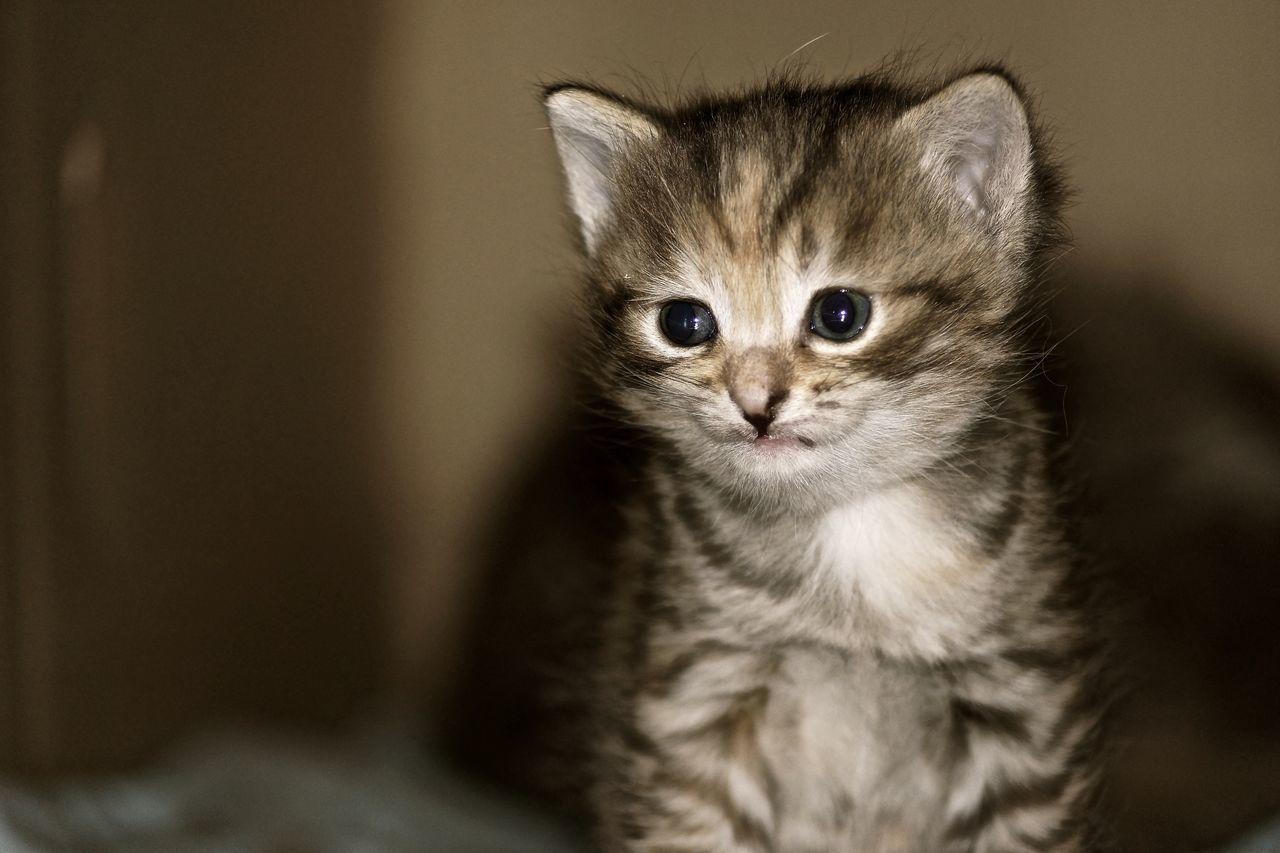 Animal Photo Animal Photography Animal Themes Domestic Animals Domestic Cat Friend Kitten No People One Animal Pets Portrait Pet Portraits Pet Portraits