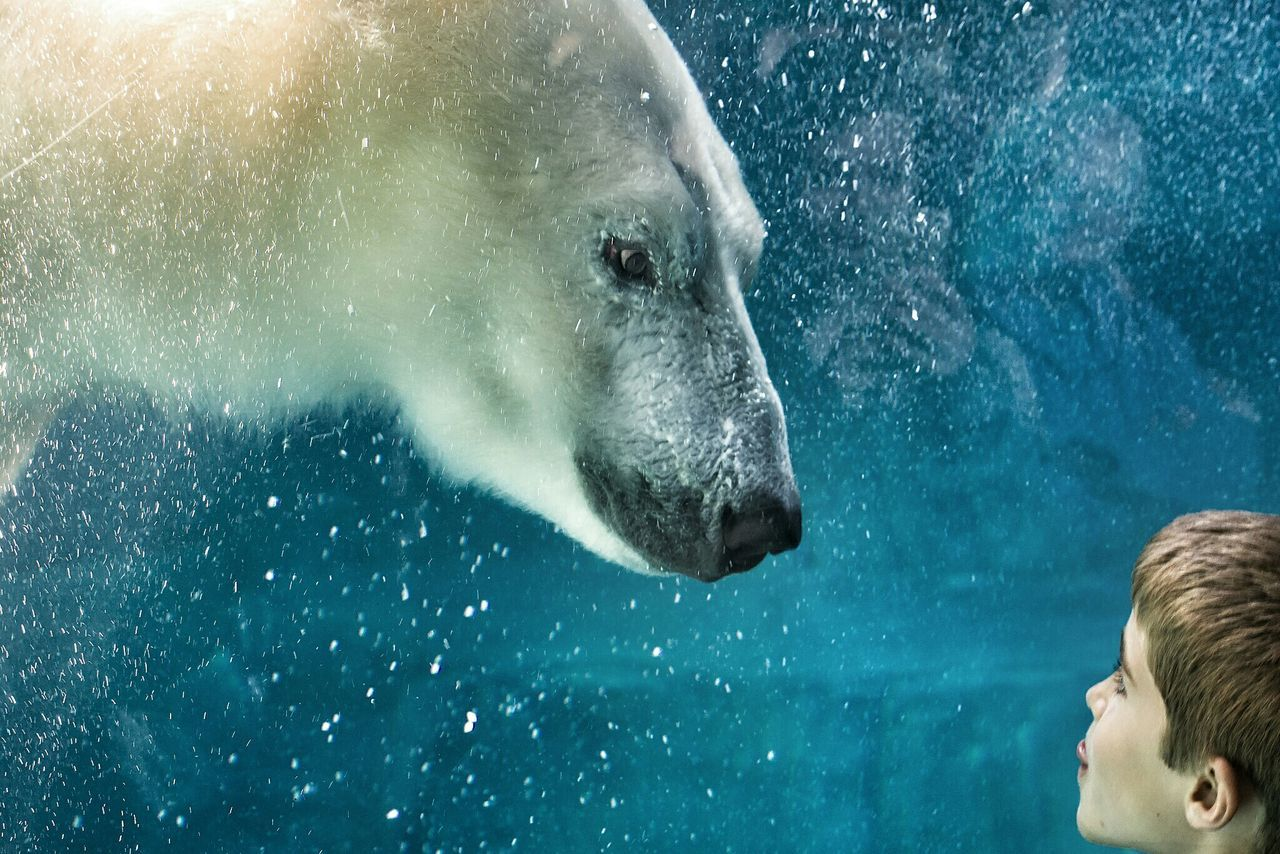 Beautiful stock photos of baer, water, snowing, one animal, cold temperature