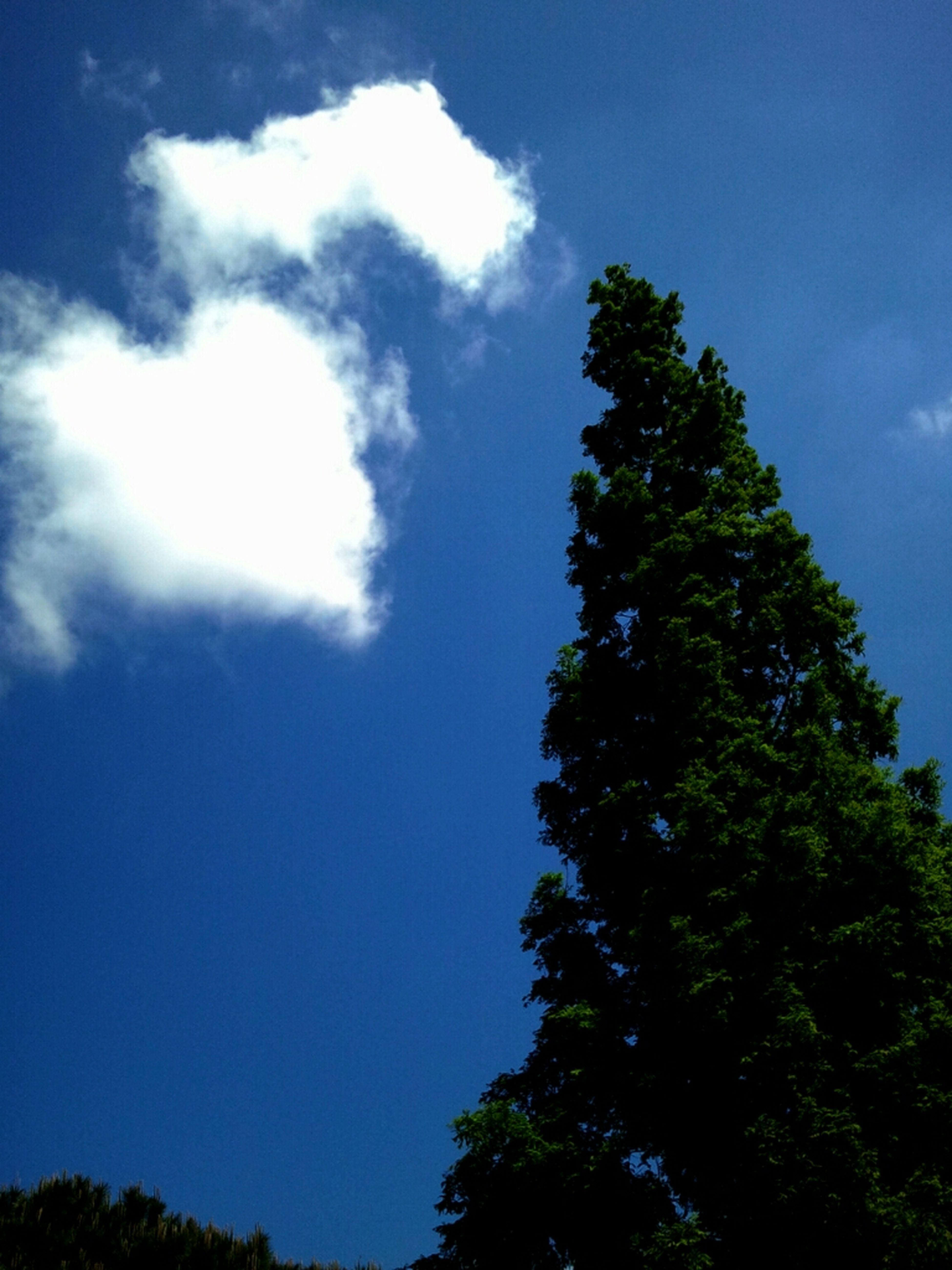 Cloud In The Shape Of Heart
