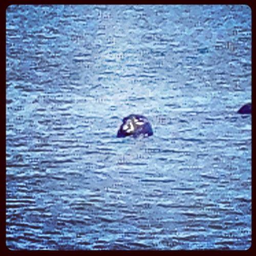 Picsplay Capecod Seal Truro highheadbeach