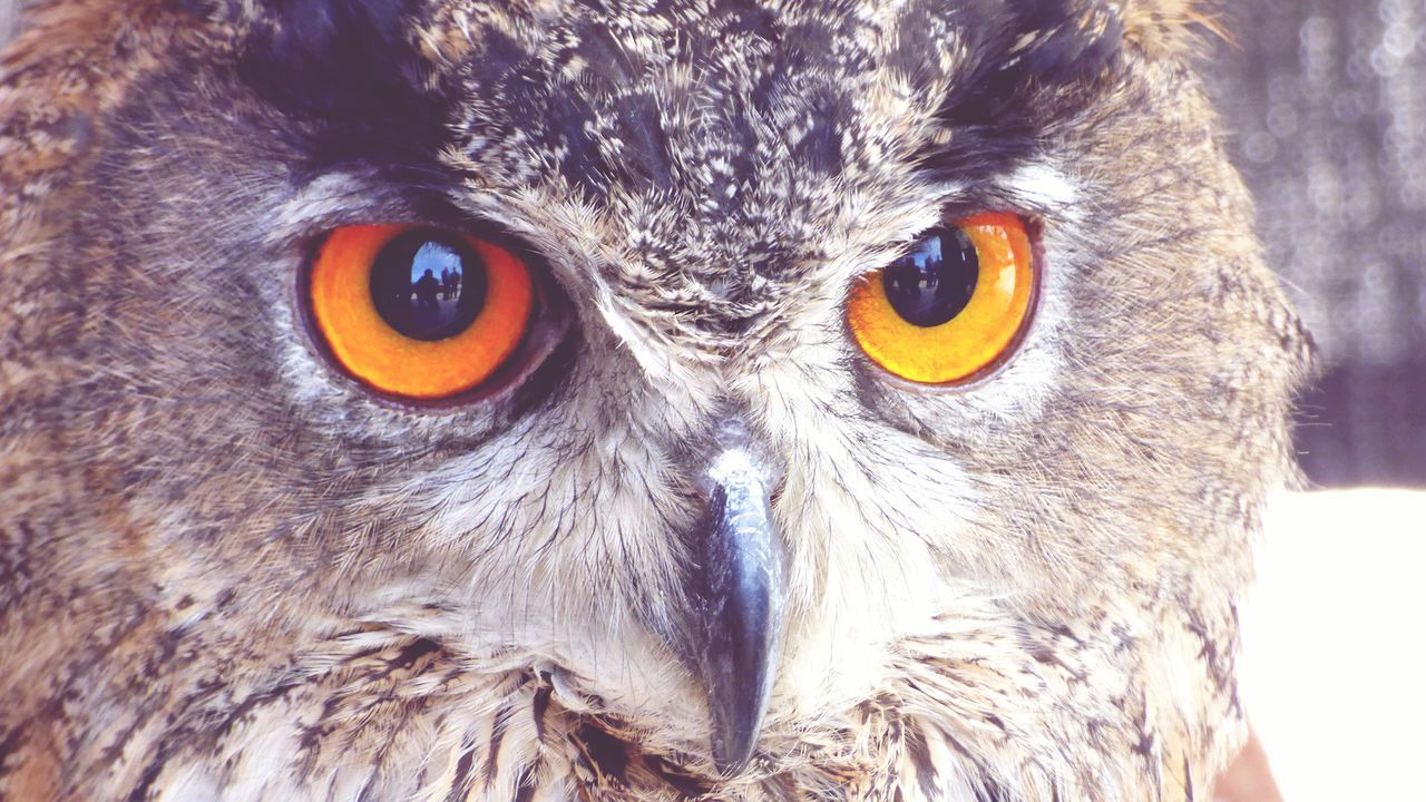 I am on the Owl Eyes Taking Photos Close-up Showcase April Looking At Camera Street Fair Birds This Week On Eyeem Fairground Mediaval Festival EyeEm Gallery Week On Eyeem Birds Theme Tent