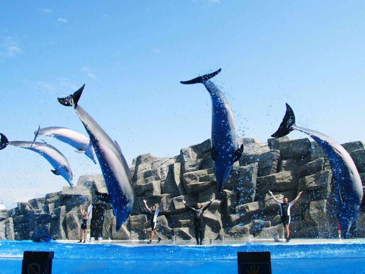 Batumi Delfin Delfines
