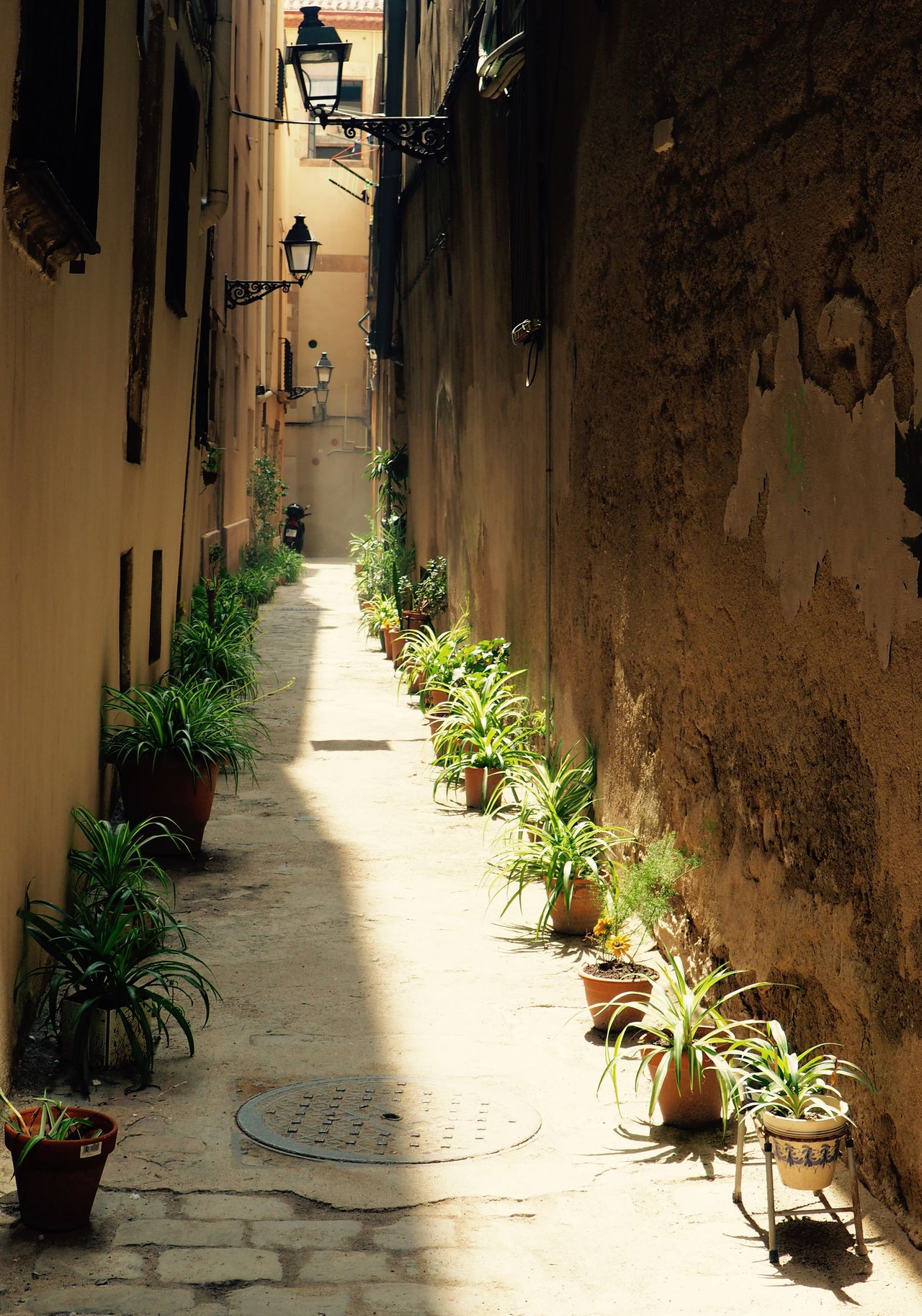 Alley Architecture Building Exterior Built Structure Day Growth Nature No People Outdoors Plant Potted Plant Residential Building The Way Forward Walkway