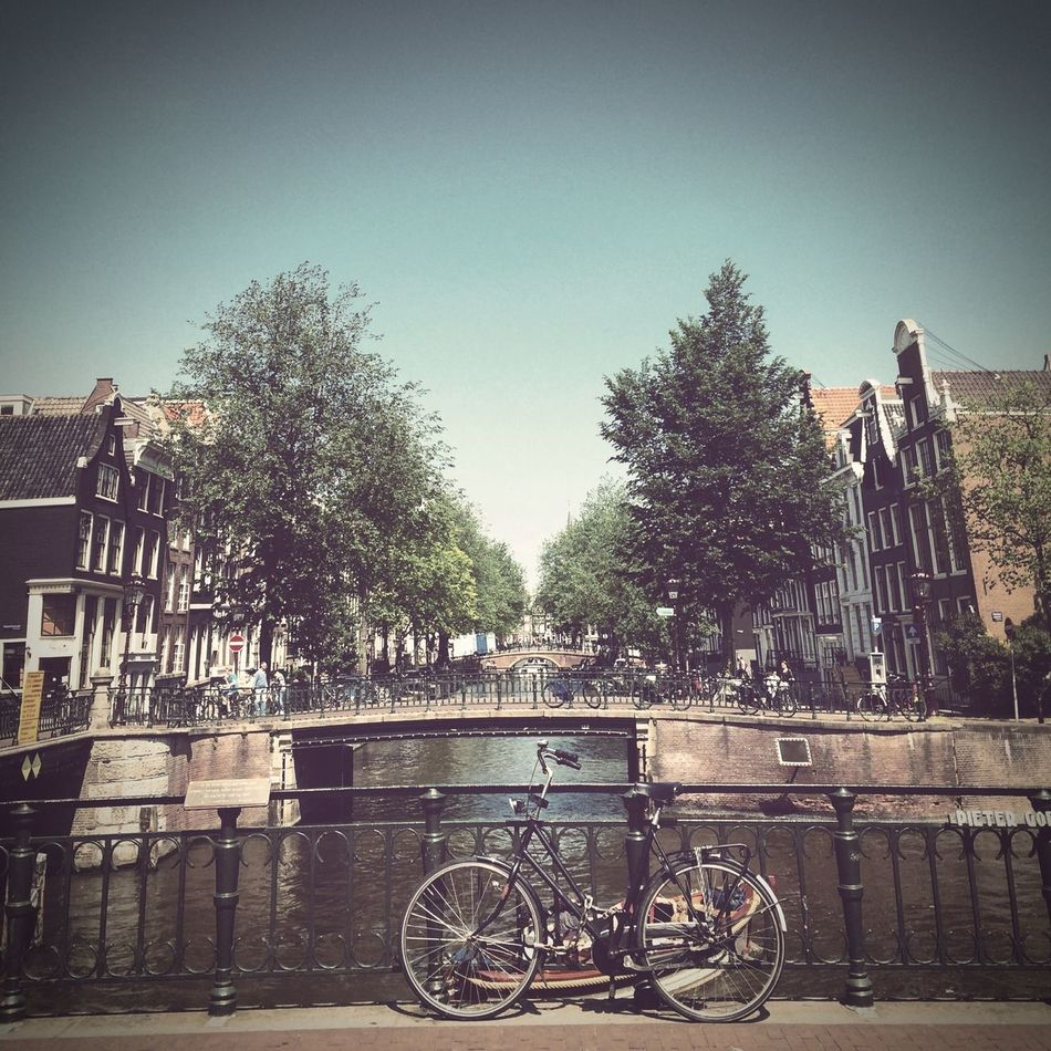 Hiworld Hiamsterdam Channels Leavingyoungwildandfree