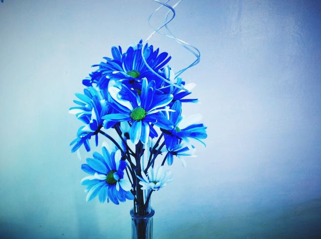 Flowers Flower Blue