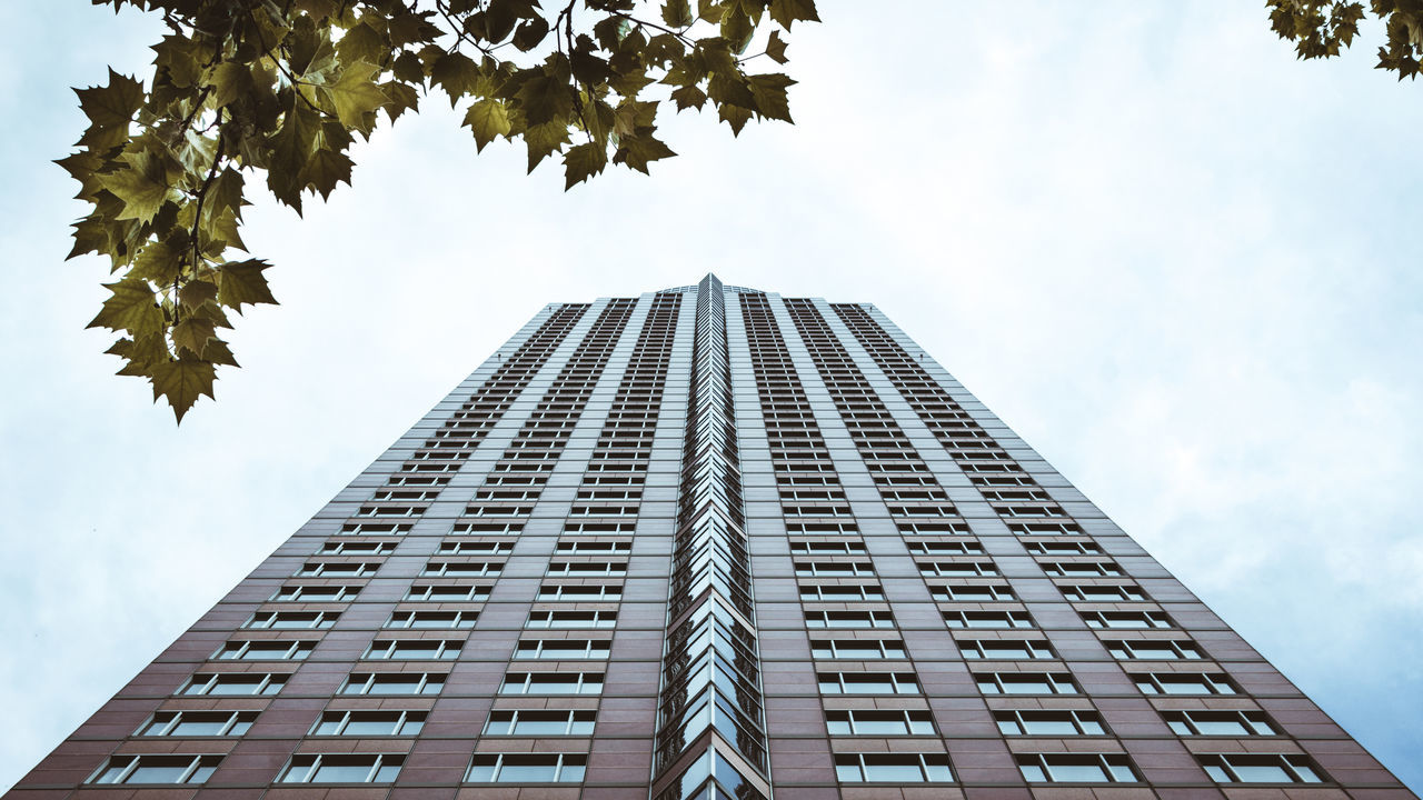 architecture, low angle view, sky, building exterior, modern, skyscraper, built structure, tree, growth, day, outdoors, no people, city