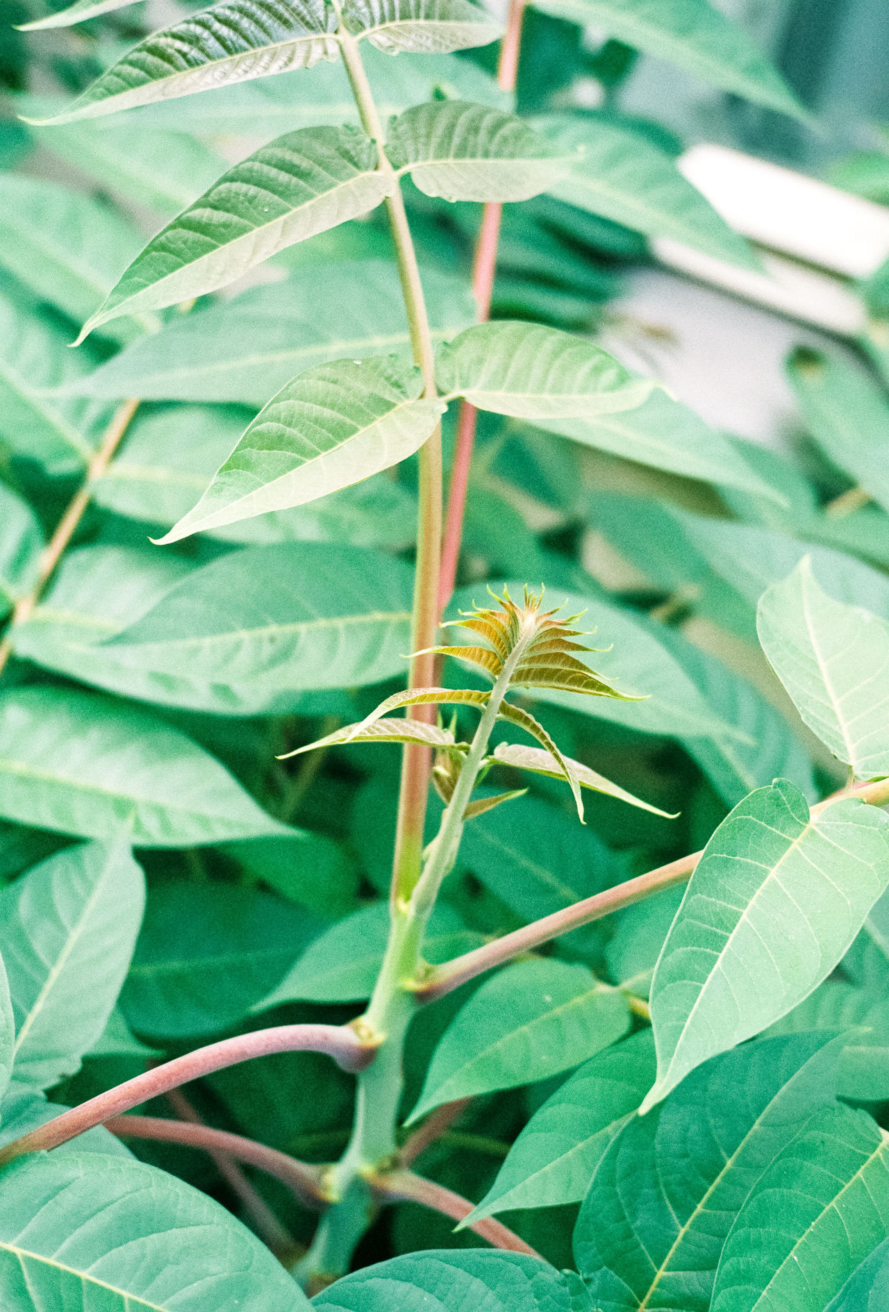 35mm Film Analog Analogue Photography Animal Themes Animal Wildlife Animals In The Wild Beauty In Nature Close-up Day Film Photography Filmisnotdead Green Green Color Growth Growth Leaf Life Nature Nature No People Outdoors Plant Plant Plants Plants And Flowers