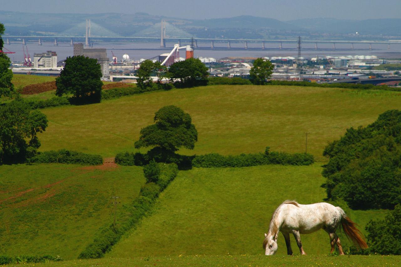 Bristol EyeEmNewHere Fields Grass Grazing Green Color Green Color Horse Landscape Livestock New Severn Crossing No People One Animal Scenics Severn Bridge