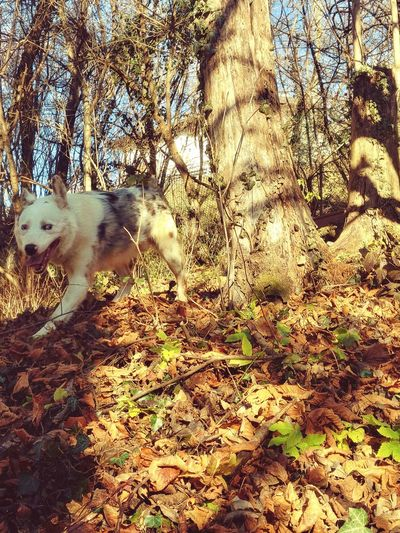 Dog Rufus Mylove Friend Full Frame Day Sunlight High Angle View Backgrounds Nature No People
