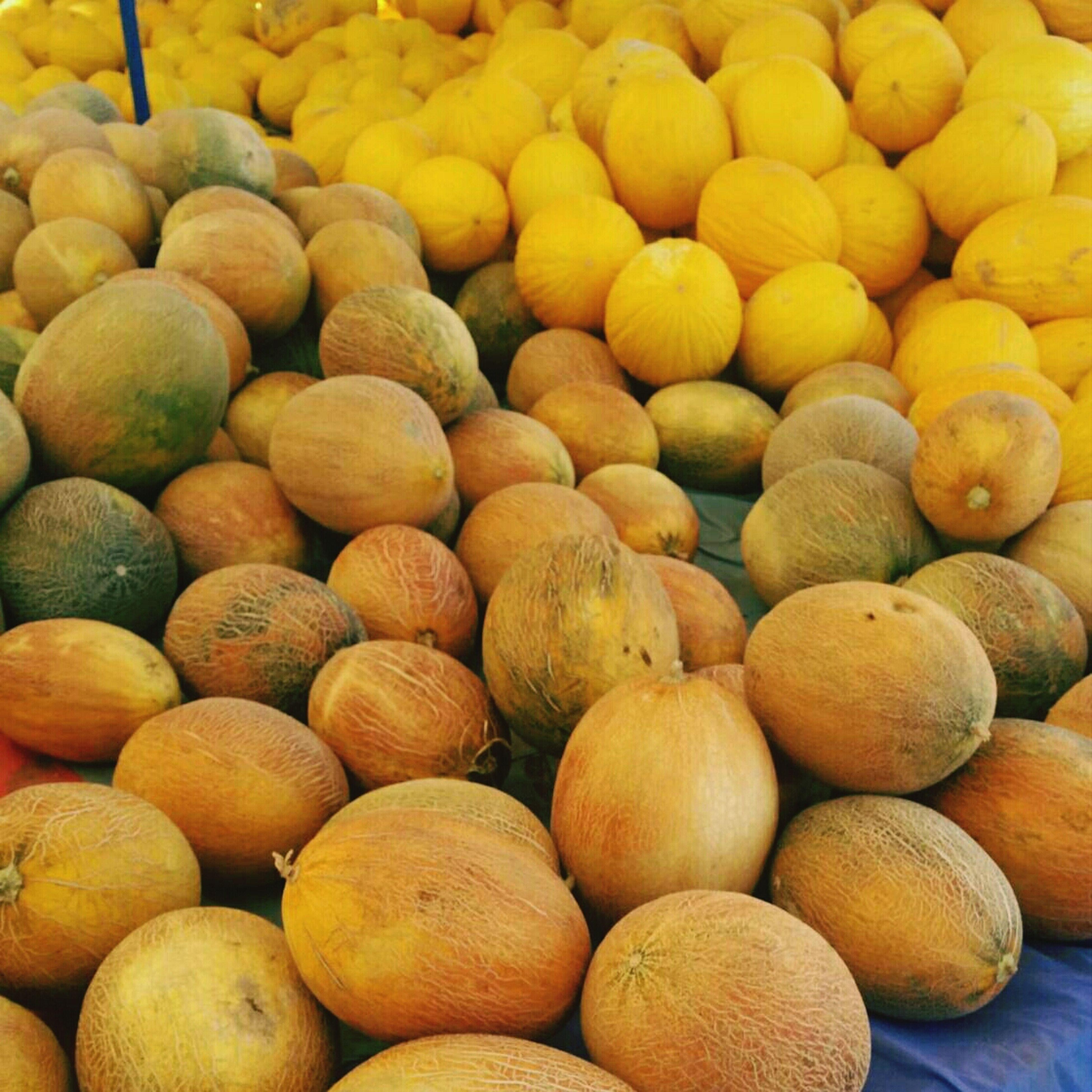 Summer Fruits Fruits Melons