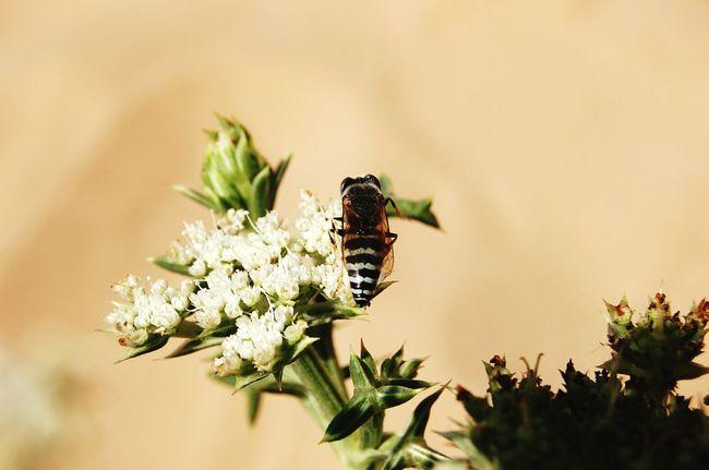 Fly tabanidae Sand Mediterranean Sea dune Tre Fontane Insect Photography Macro Photography