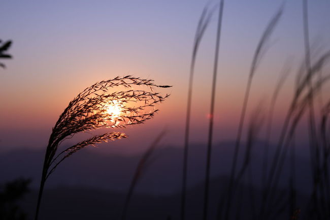 Sunrise Taimoshan HongKong Photography Canon760D Sigmalens Without Edit ^^ Justshare Relaxing Landscape