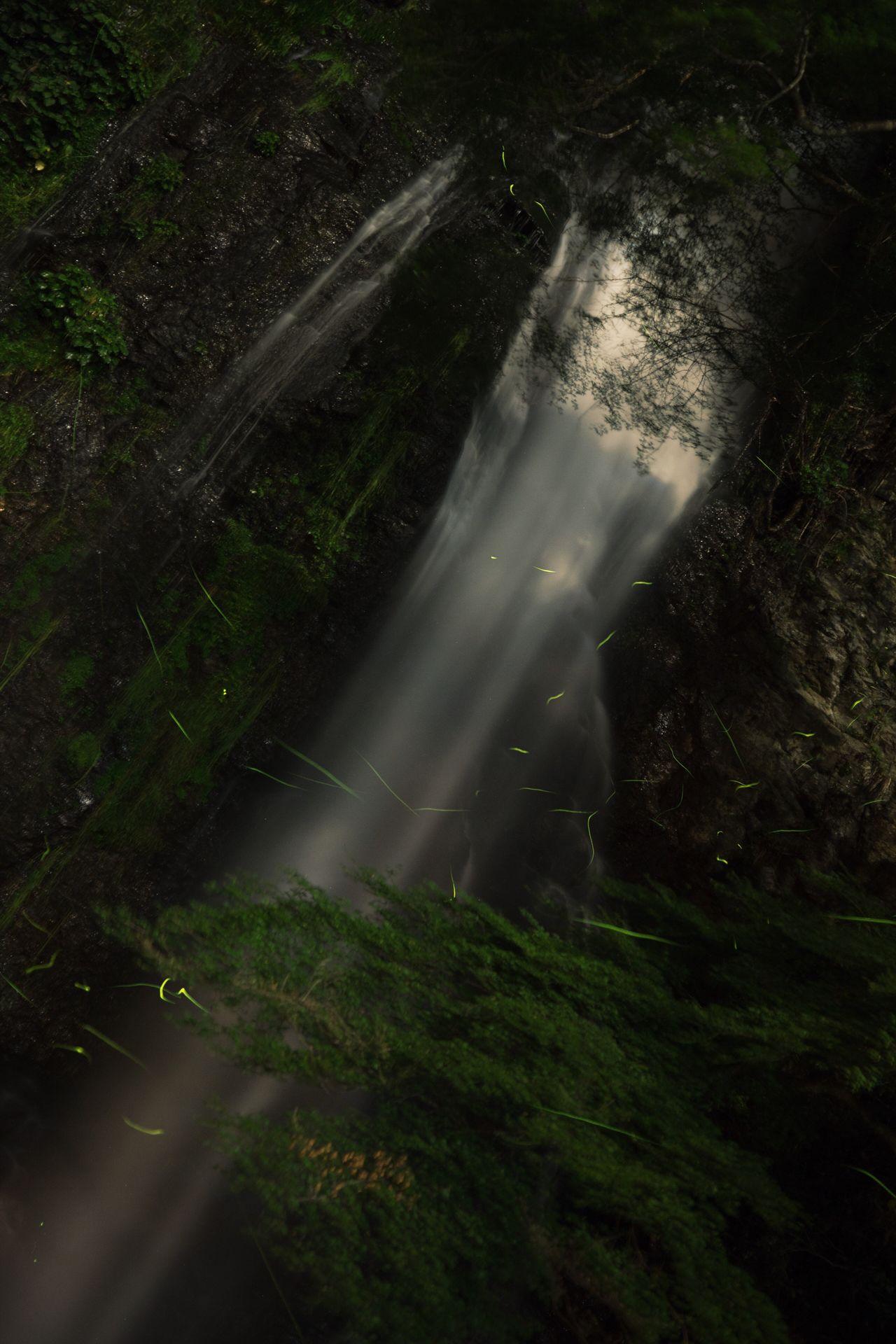 箕面 箕面の滝 滝 ホタル 蛍