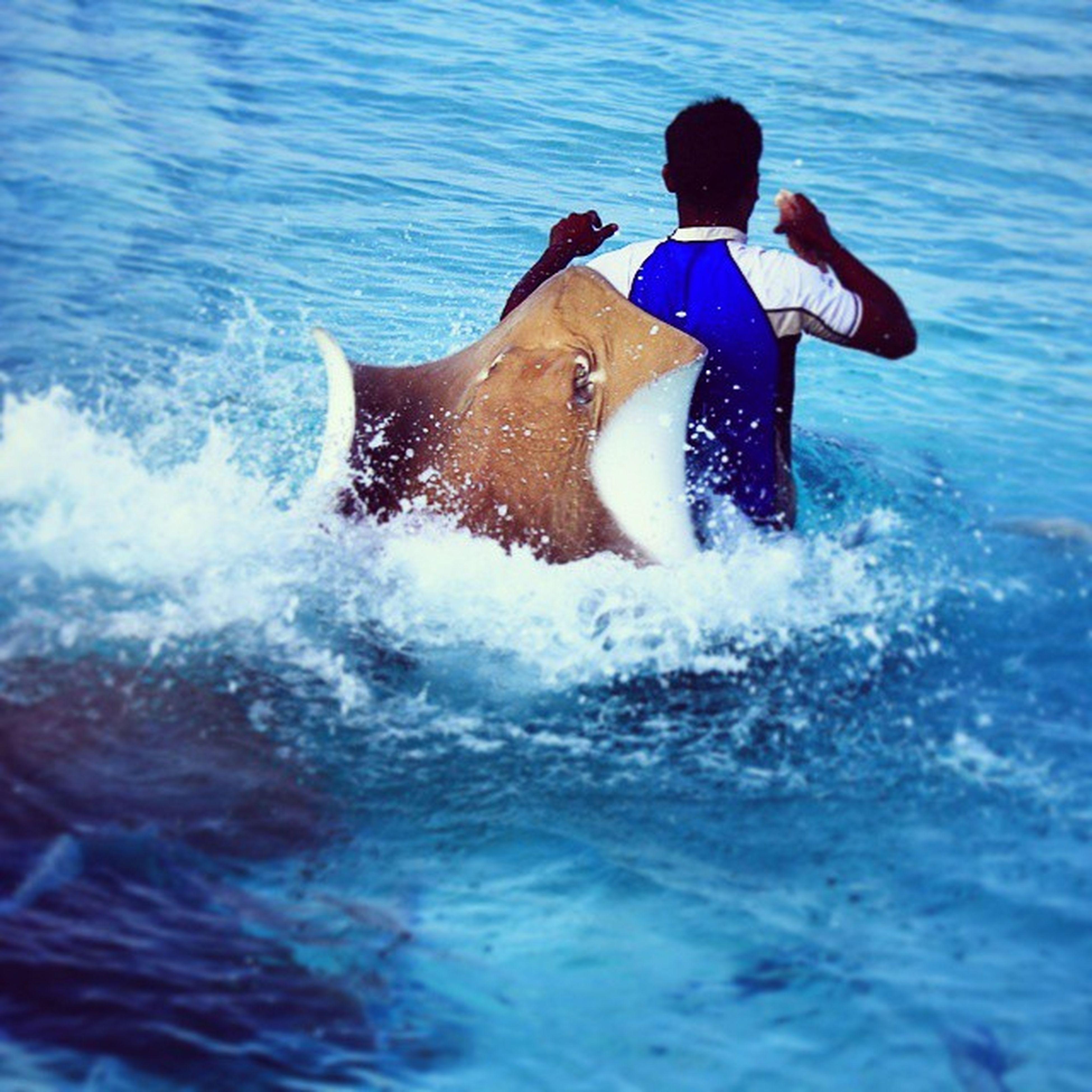 water, sea, animal themes, one animal, leisure activity, lifestyles, pets, swimming, waterfront, dog, domestic animals, mammal, motion, splashing, wave, full length, enjoyment, vacations