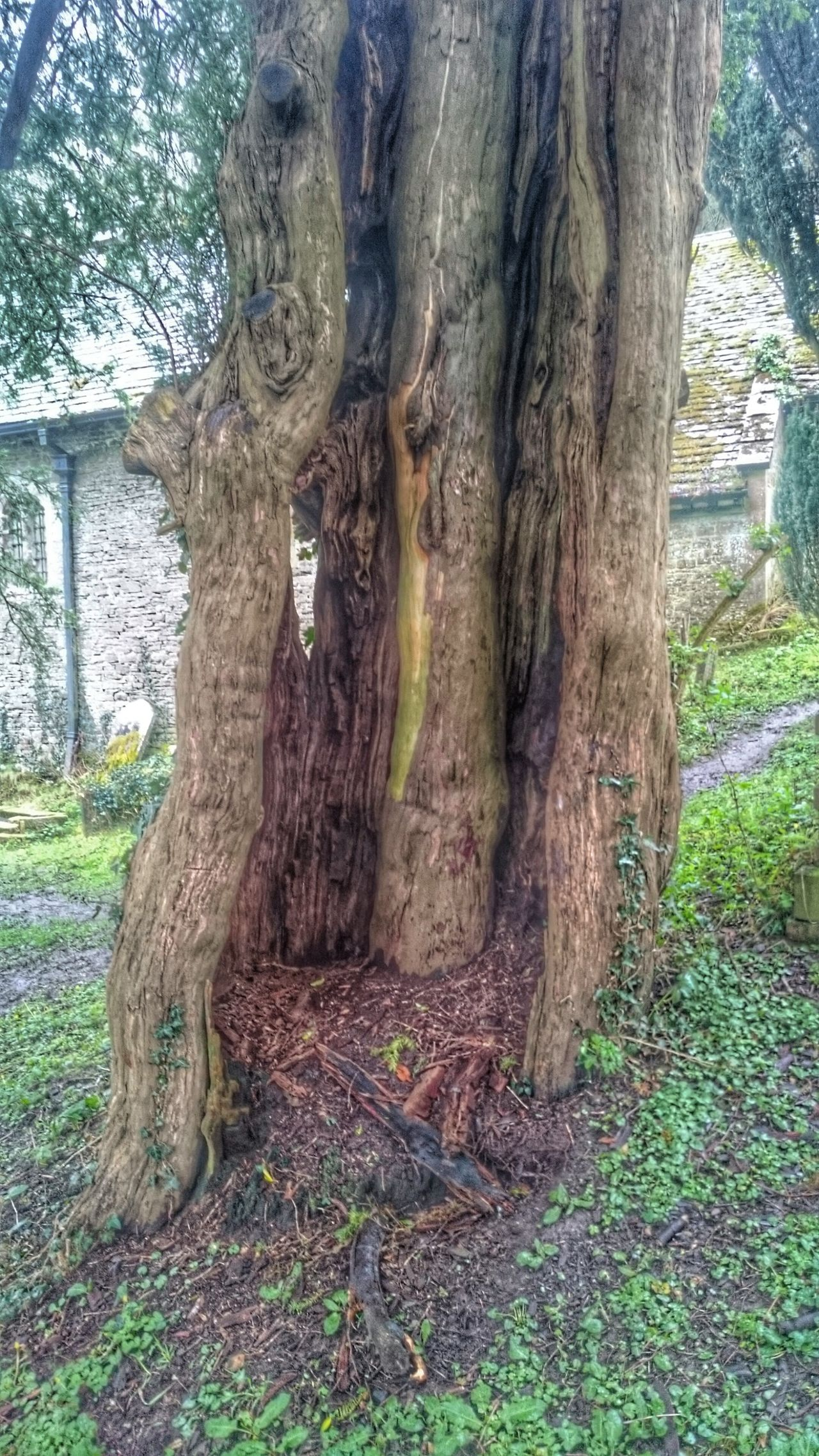 Wales Photography Taking Photos Check This Out Tree Old Tree Dying Tree Inside Out Inside Things Walking Around Hugging A Tree Escaping Nature Interesting Perspectives Bark