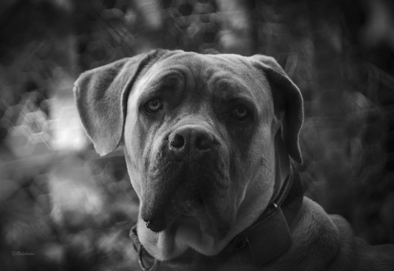 Dog Pets One Animal Animal Themes Domestic Animals No People Close-up Portrait Nature Outdoors Day Tadaa Community From Where I Stand Animal Portrait Animal Posing Bnw Bnw_collection Blackandwhite