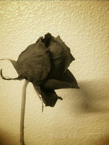expired Flower Rosé