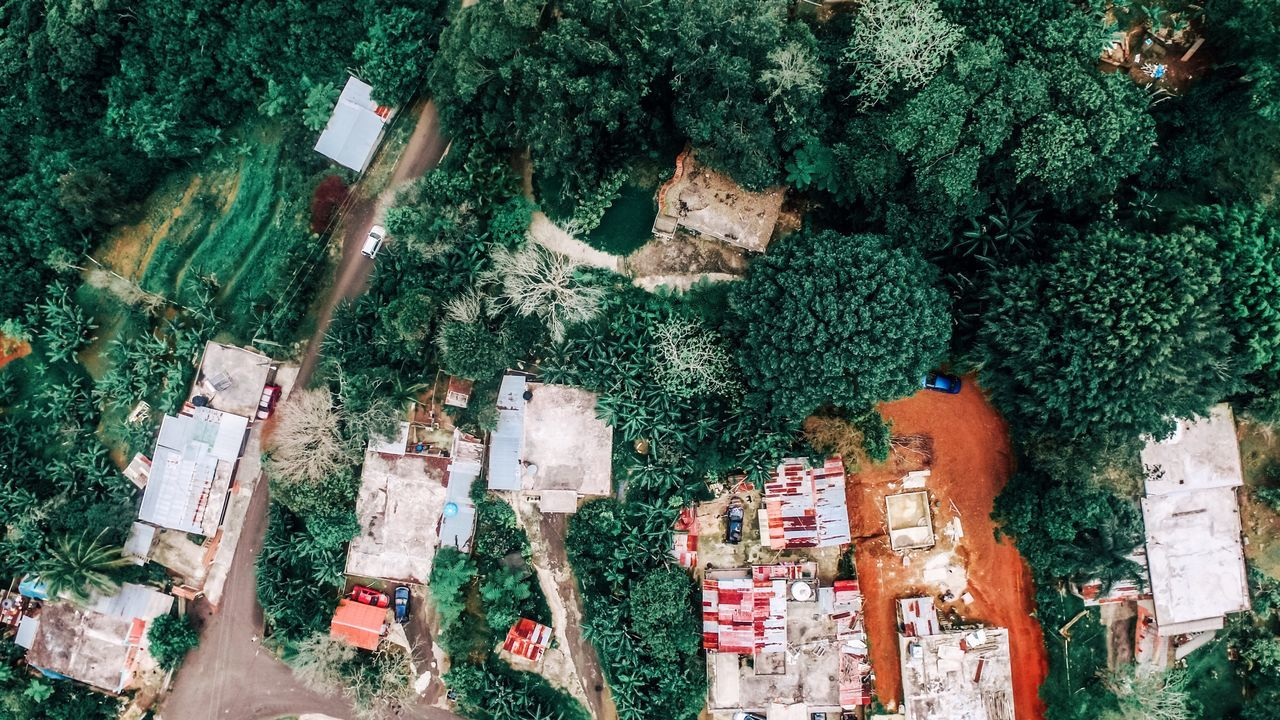 Puerto Rico Tree Day Outdoors Landscape Architecture Built Structure Scenics High Angle View Nature Beauty In Nature Rural Scene Agriculture Travel Growth Aerial Photography Dronephotography Aerial Shot Tree Tranquility No People