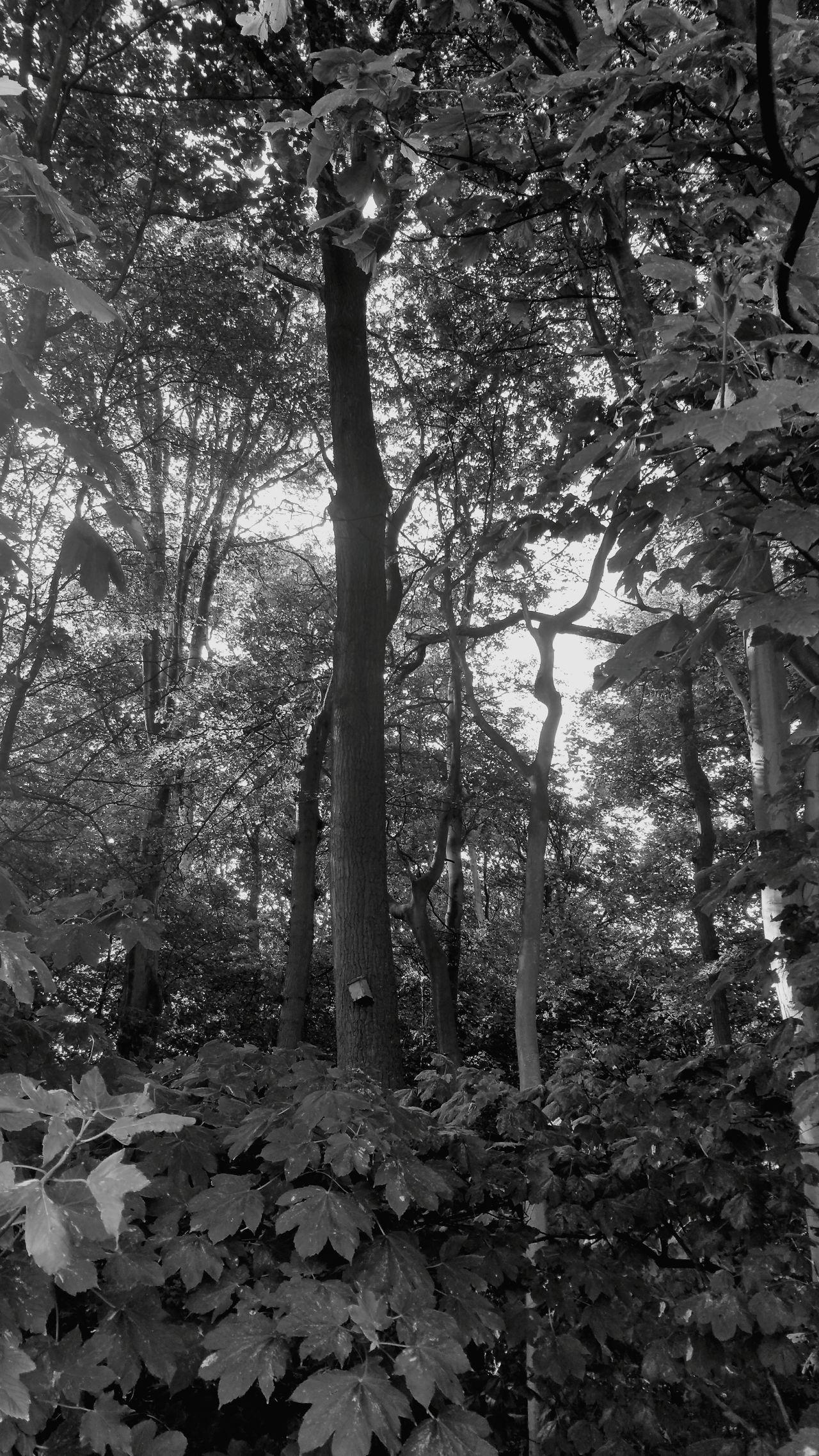 TreePorn Tree Art Treetastic Landscape #Nature #photography
