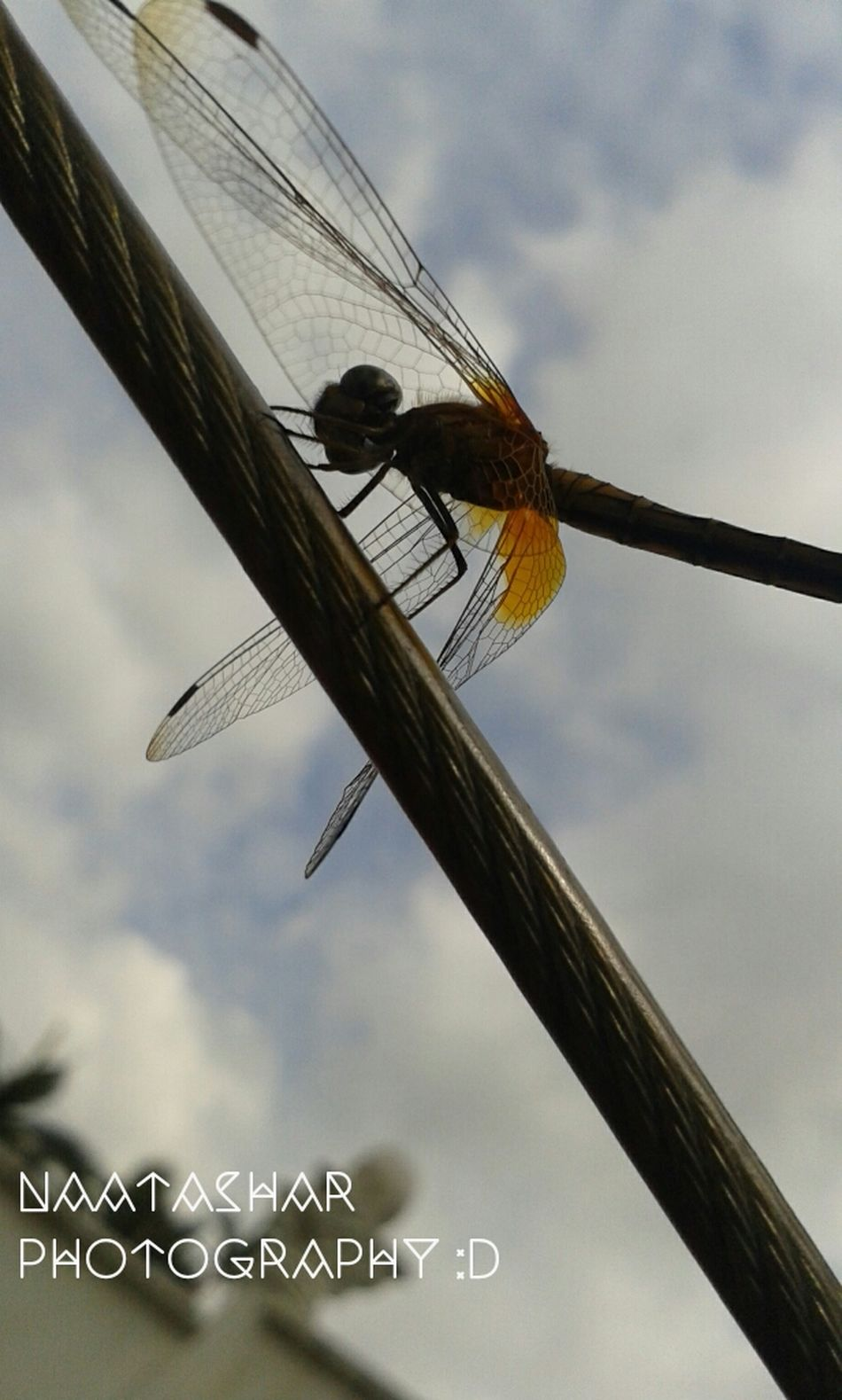 FLY! Taking Photos Nature_collection Iseeilikeisnap Dragonfly Natureonyourdoorstep
