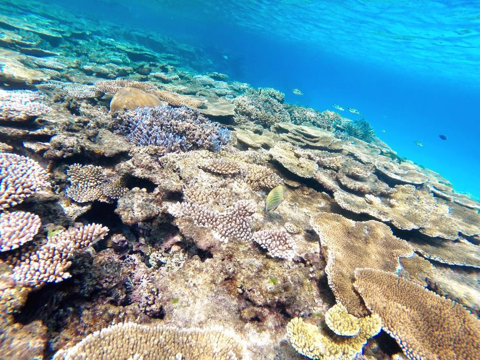 First Eyeem Photo Haterumajima Okinawa Island Sea GoPro Hero3+ Hateruma Blue Nature's Diversities