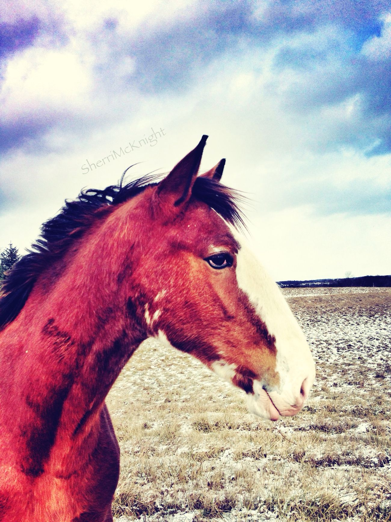 Definition of beauty :) EyeEm Best Shots EyeEm Nature Lover Horse Shootermag