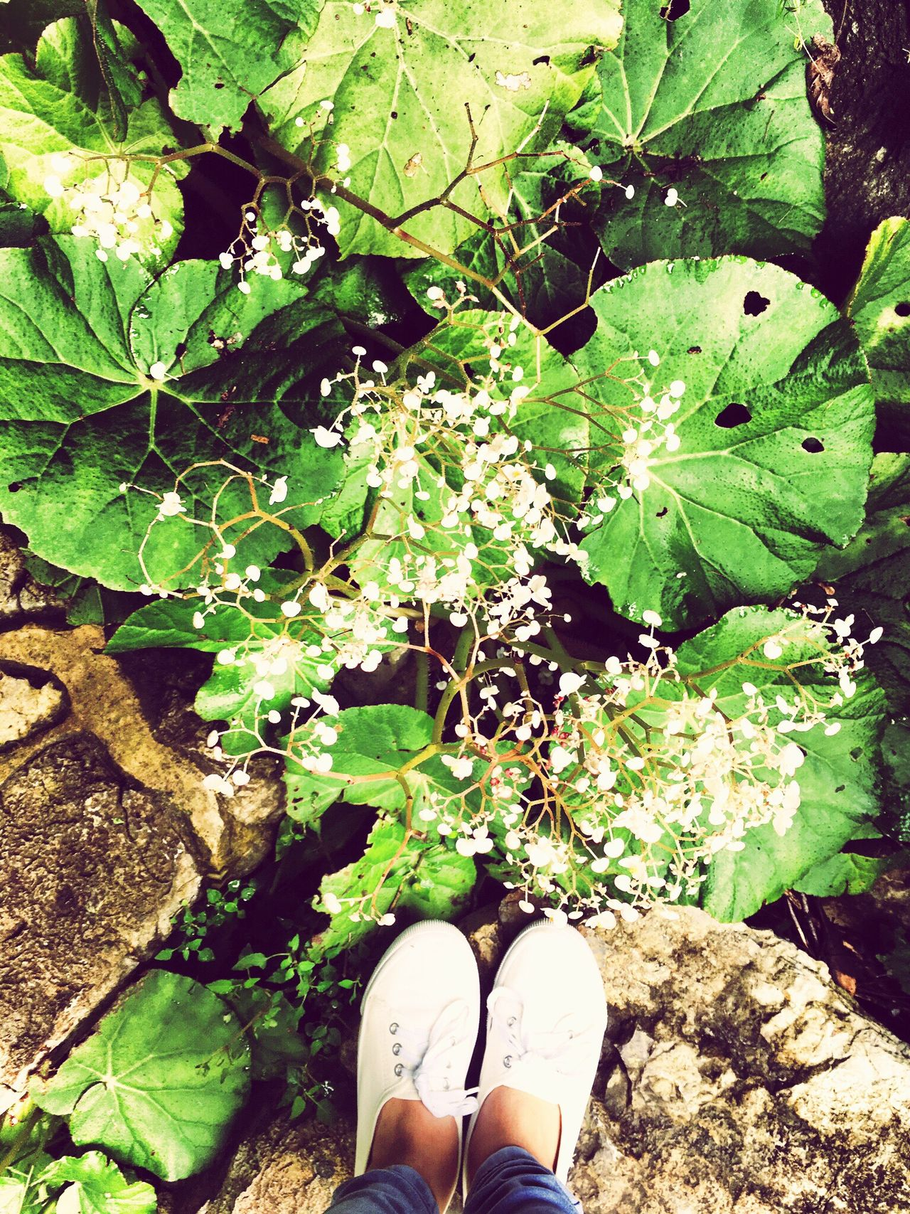 Keep your feet on the ground. The Traveler Girl Wander Nature Feetselfie Feet On The Ground Out Of City Chill Somewhere Lost Discover The Philippines EyeEm Nature Lover Eyeemphotography Eyeem Philippines