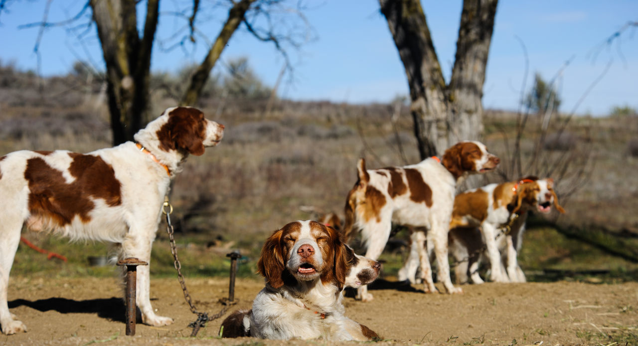 Beautiful stock photos of jagd, domestic animals, dog, mammal, animal themes