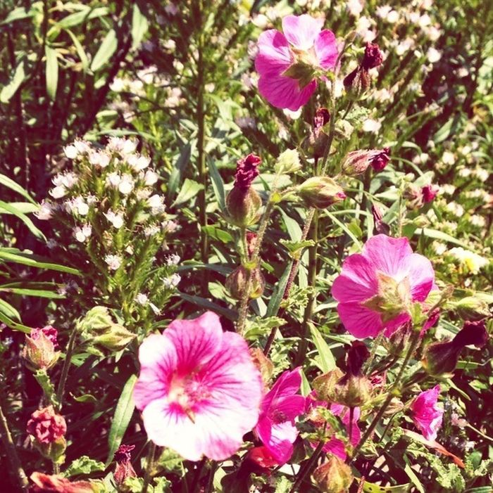 Flowers San Diego Buena Creek Gardens