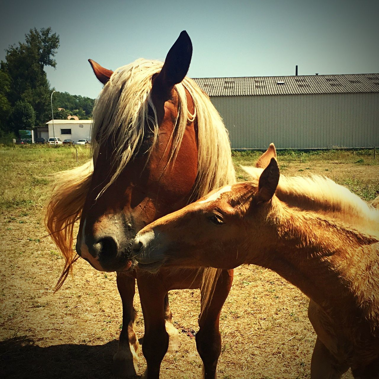 Horses Horse Horse Life Tenderness Tender Animals Animal Animal Photography Animal_collection Nature Nature_collection Nature Life Life Love Beauty Beauty In Nature Beauty Of Nature Cute Lovely Foal Baby Horse with his Mother 😊