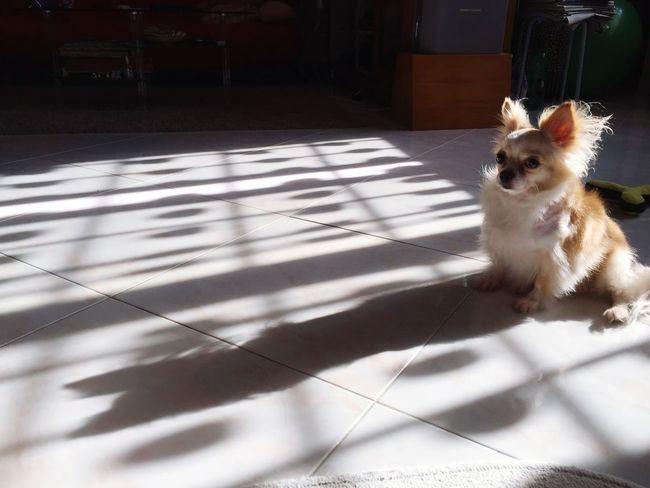 IPhoneography I Love My Dog Showcase: November