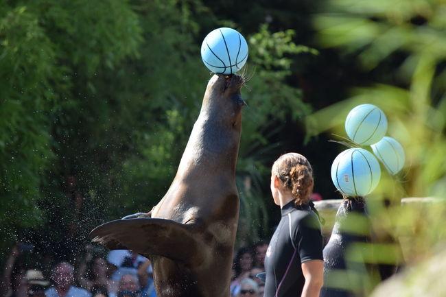 Blue Focus On Foreground Le Palmette Otarie Outdoors Person Public Transportation Sea Lion Spectacular Tourism Tourisme