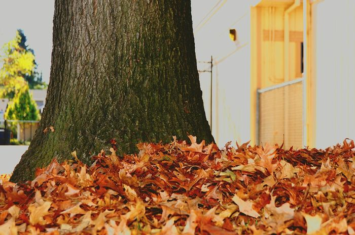MyGallery Autumn Leaves Tree Nature Photography