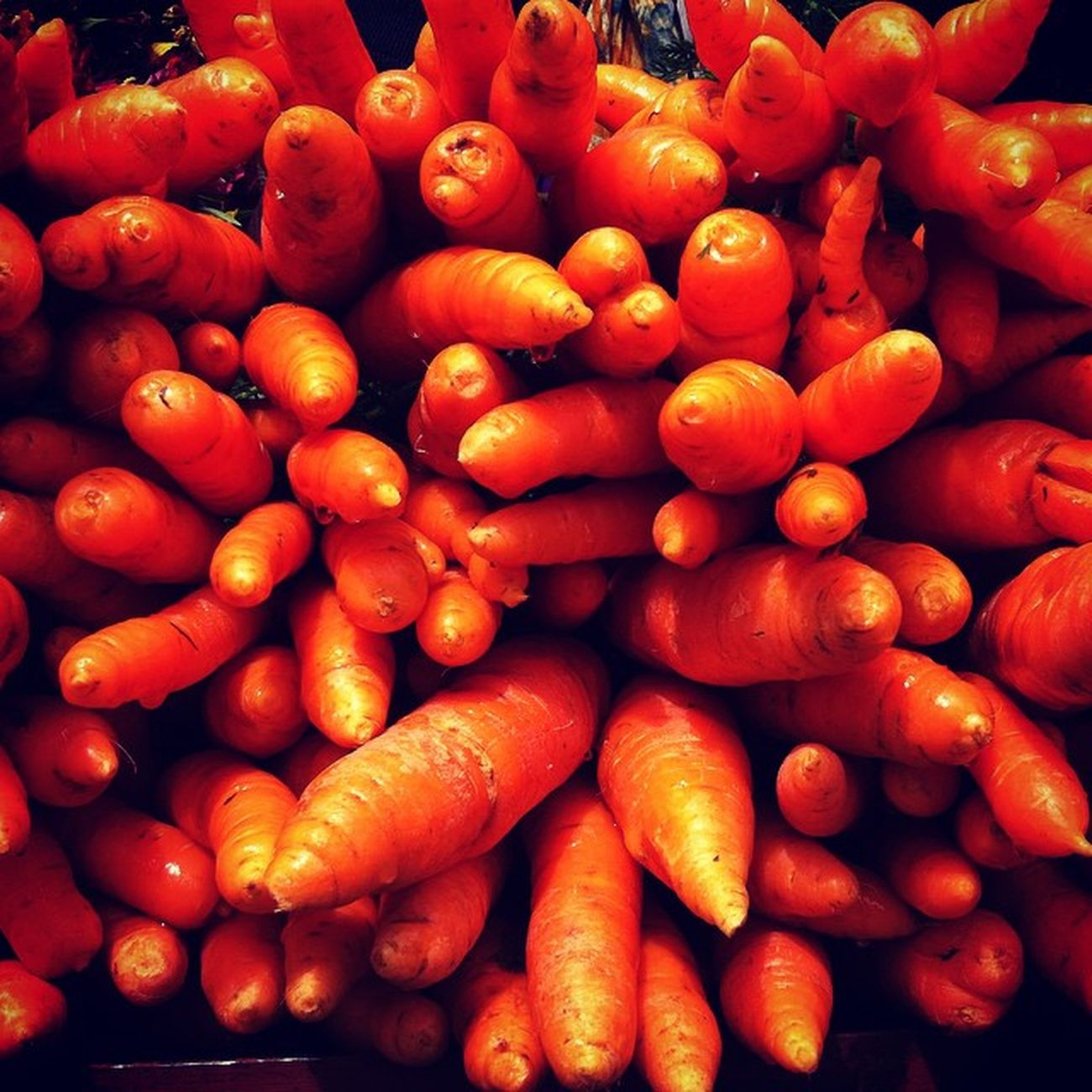 Carrot Vegetables Ooty Random Click Instamysore Instaevening Instaphotography Photooftheday Orange Travel Friends Iphone4 Sunday Road Trip Weekend Rain Tamil India