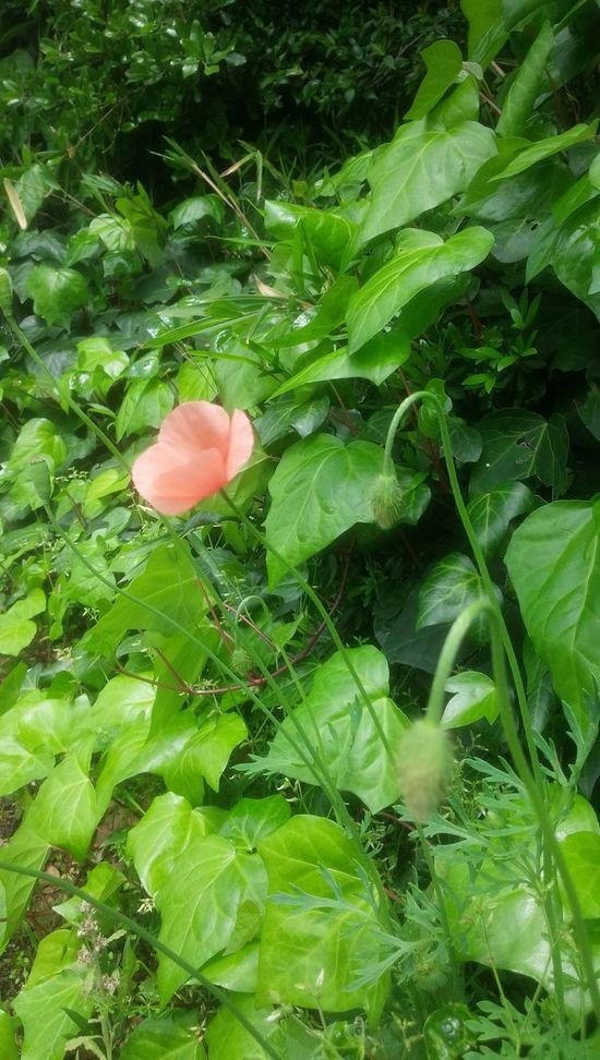 Streetphotography Amagasaki Flowers Taking Photos Fiowers