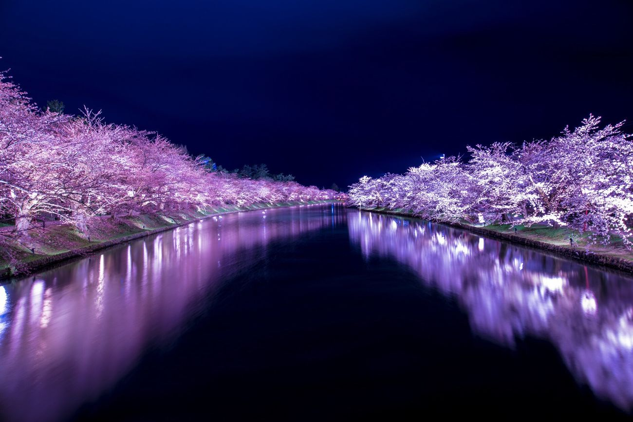 弘前 弘前公園 弘前城 桜 反射 青森 Aomori Hirosaki Cherry Blossoms Reflection Reflections Japan 日本