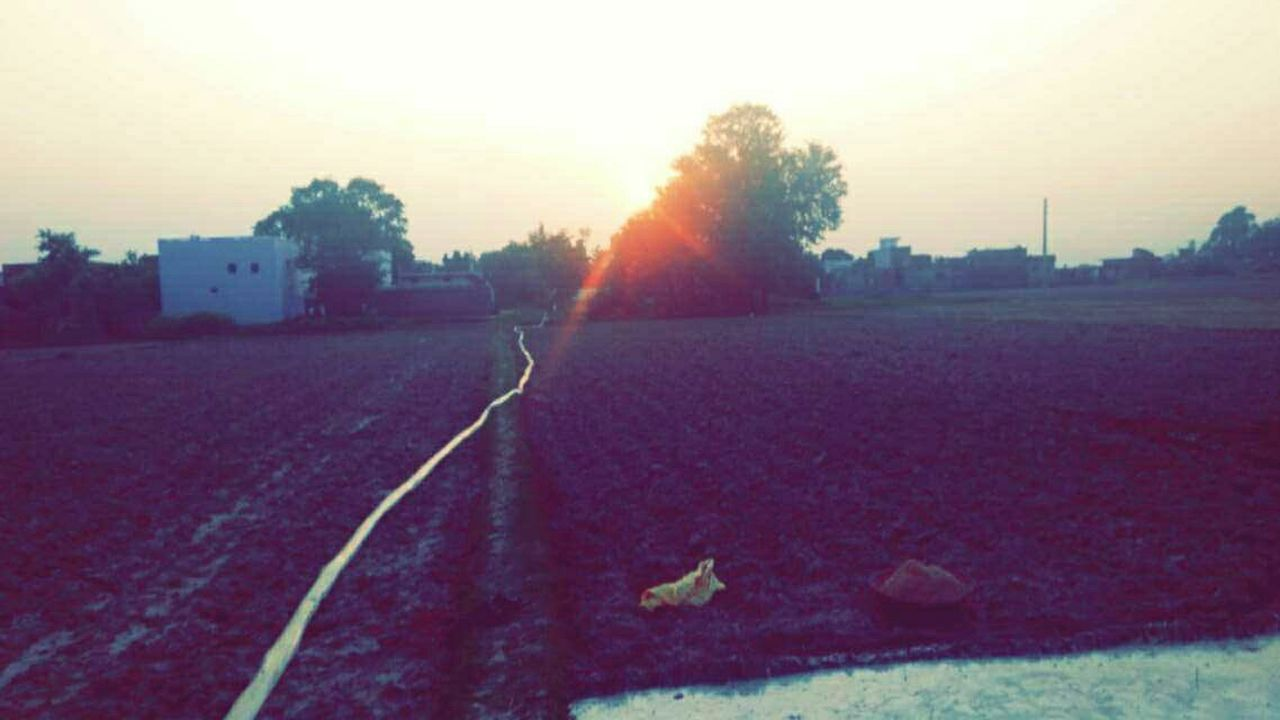sunset, nature, outdoors, field, tree, growth, agriculture, no people, day, clear sky, sky, beauty in nature, freshness