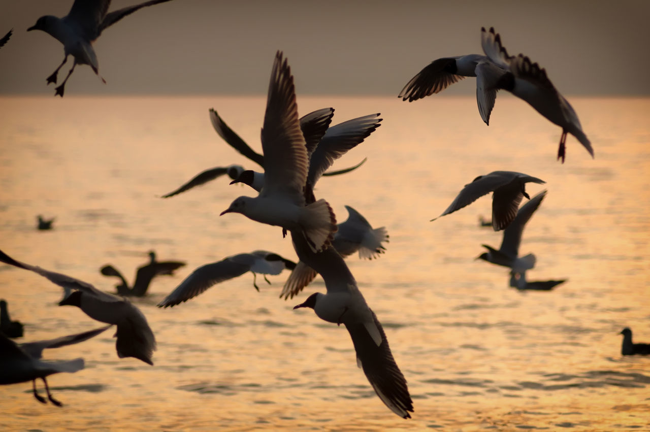 Flock Of Seagulls Flying Over Sea During Sunset