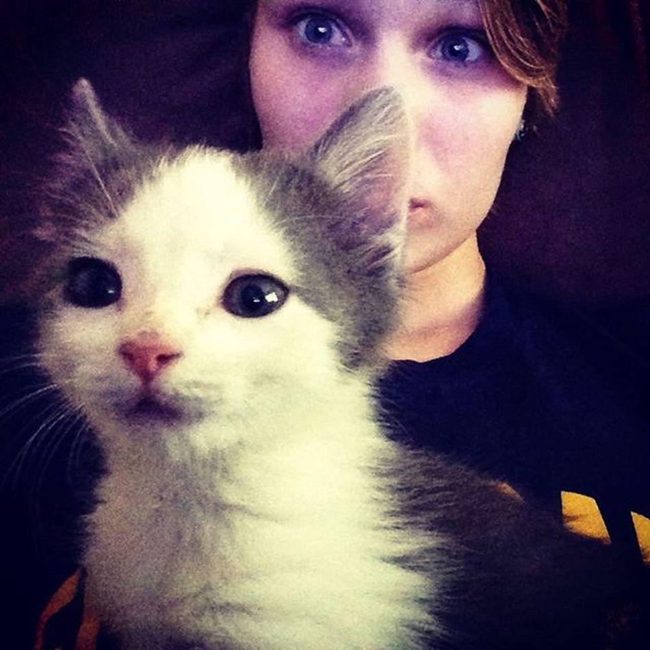 LOOOK AT MY KITTEN!!! Kitten Kitty Cat Cat Cutiepies Cuties Us Cat Andme Me Andcat Me Pinknoses White Grey Gray Greyandwhite Whiteandgrey Grayandwhite Whiteandgray Longhaired Long Hair Longhair Longhairedcat meow mew mow
