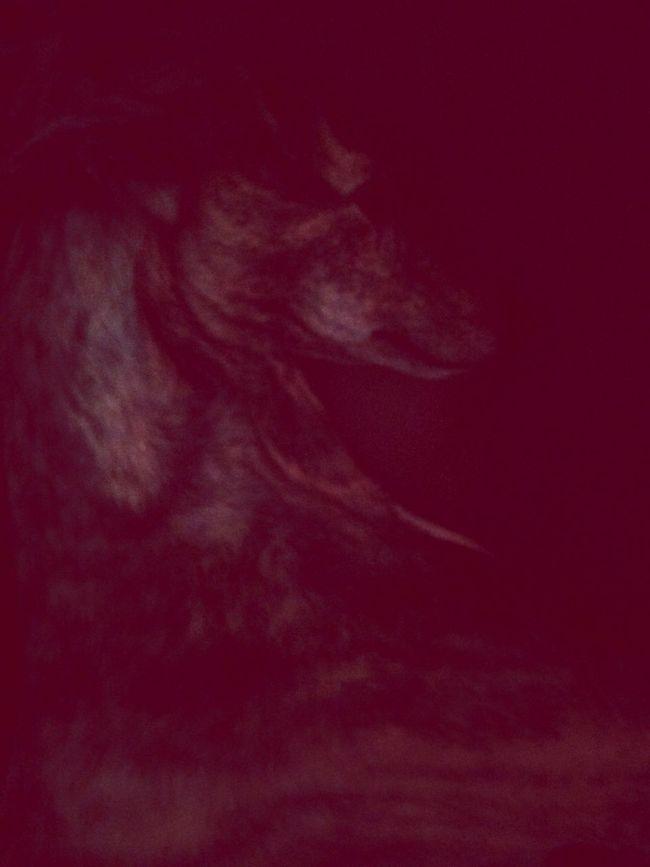 red room Red Dog Greyhound
