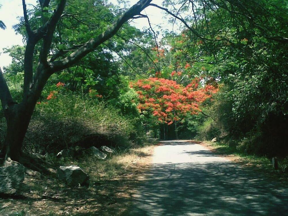Drive to madanpalli Forest Drive