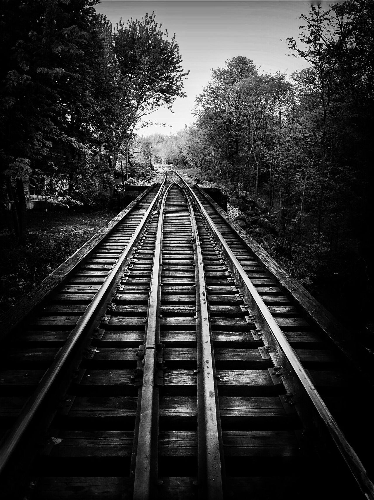Black And White Tree Railroad Track The Way Forward Rail Transportation Transportation No People Outdoors Day Nature Sky Oswego, IL Hudson Crossing Park, Oswego, IL Welcome To Black Long Goodbye The Secret Spaces The Great Outdoors - 2017 EyeEm Awards