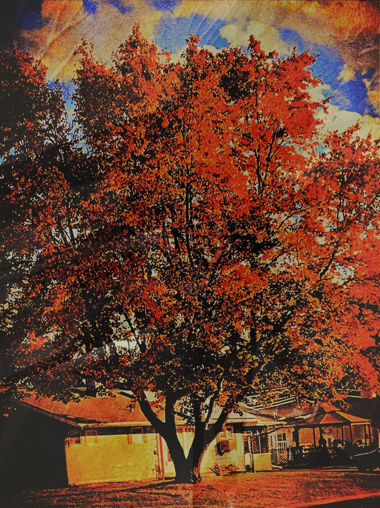 Beautiful Fall tree Tree Nature Growth Beauty In Nature Day Outdoors Autumn Sky Scenics Tranquility Iphonephotography Fallfoliage Fall Beauty Cloud - Sky Beauty In Nature Colorphotography Camerafilters Multi Colored Taking Pictures
