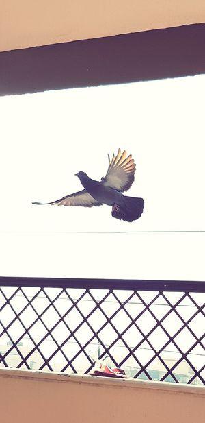 freedom fly bird nature morning Bird Flying Day Animal Themes Outdoors Bird Of Prey